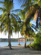 איים זולים למכירה - באיזור ברזיל